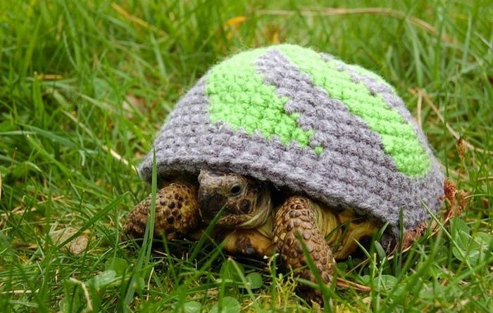 Как сделать одежду для черепахи своими руками