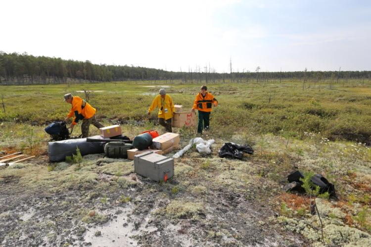 успокоить агентство лесного хозяйства красноярского края увидите